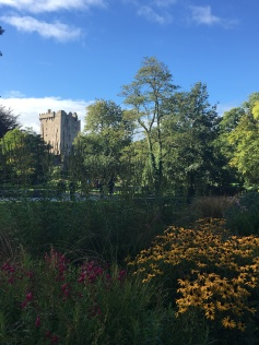 flowers in the foreground, Blarney Castle peaking in the back